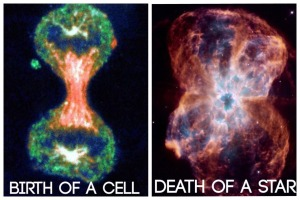 birth of cell, death of star